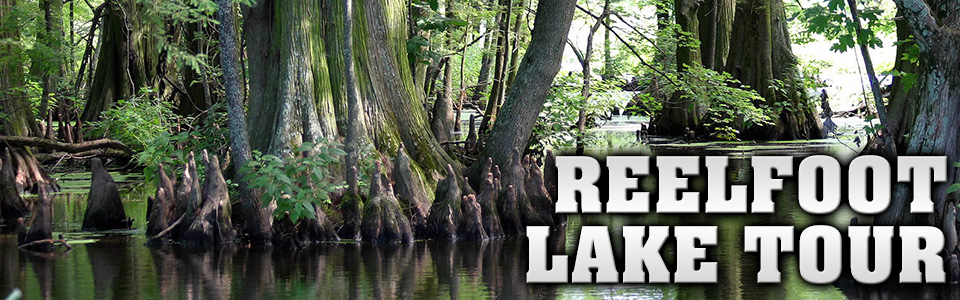 Parker's Outfitting :: Reelfoot Lake Tour